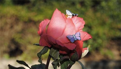 butterfly-cufflinks-mon-art